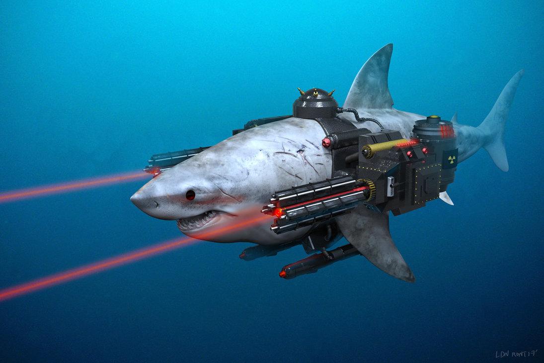 акула в калифорнии, пример фото