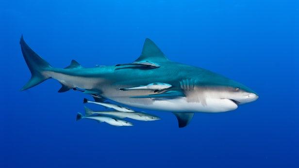 акулы, серферы, тихий океан